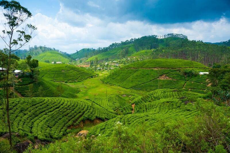 Srí Lanka by bez neho nebola úplná: Cejlónsky čaj zmenil osud krajiny    verne.sk